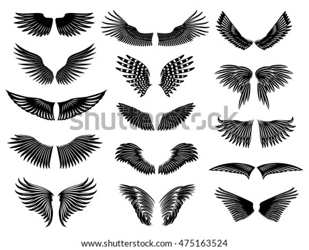 Wings of real birds in nature. Vector collection symmetric wings. Simple style