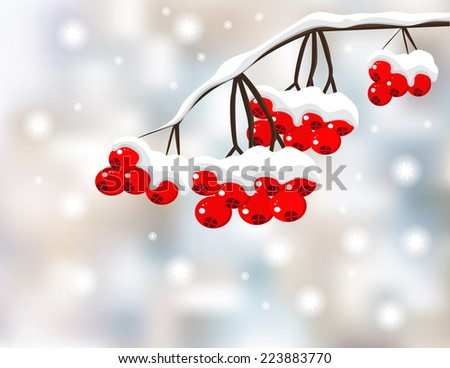 Winter background with red berries and snow  - stock vector