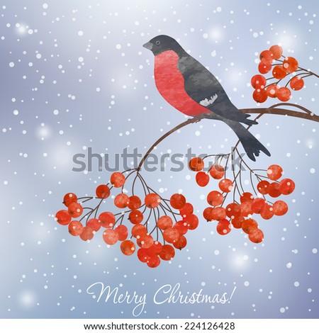 Winter card  with bullfinch on a branch of rowan - stock vector
