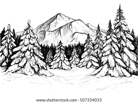 Winter Forest Sketch Black White Vector Stock Vector ...