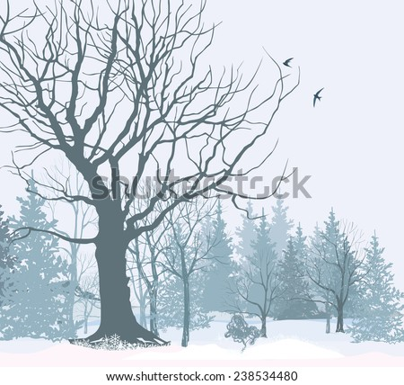 Winter landscape. Park or garden in snow. Christmas wallpaper. Snowy forest background. Tree without leaves over snow.   - stock vector