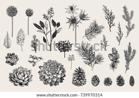 Winter set. Evergreen, cone, succulents, flowers, leaves, berries. Botanical vector vintage illustration. Black and white