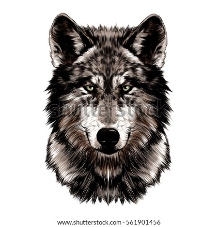 wolf face vector color drawing