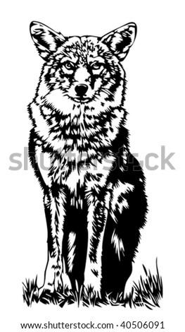 Wolf illustration - stock vector
