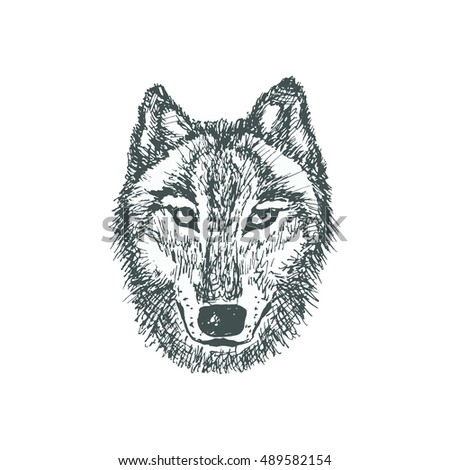 Wolf sketch illustration