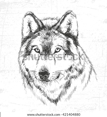 Wolf, wild animals. See also the other sets of animals. - stock vector