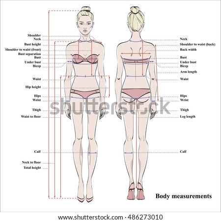 Size Chart Measurement Diagram Male Female Stock Vector