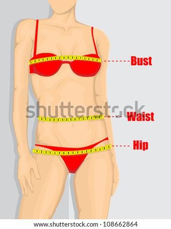 Woman measurement chart - stock vector