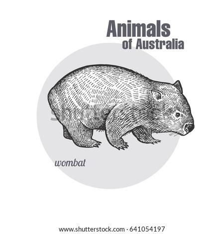 wombat hand drawing animals of australia series vintage engraving style vector art illustration