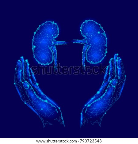 Kidney stock images royalty free images vectors shutterstock world kidney day greeting card low poly design template health awareness promotional poster human toneelgroepblik Choice Image