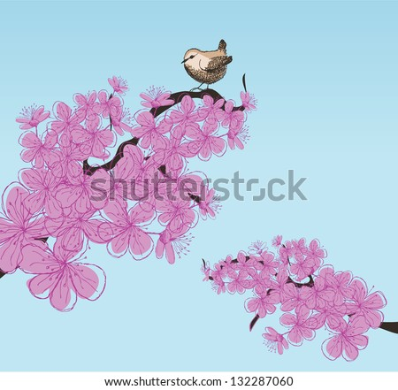 Wren sitting in cherry blossoms. EPS 8 vector, grouped for easy editing. No open shapes or paths. - stock vector