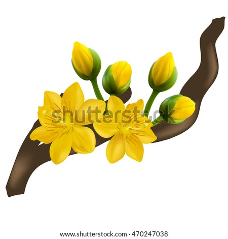 Yellow Apricot Flower, traditional lunar new year in Vietnam