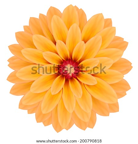 Yellow chrysanthemum flower. Photo realistic vector illustration. Isolated on white.  - stock vector