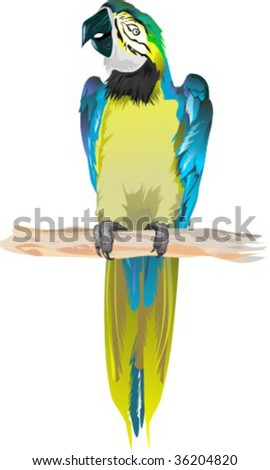 yellow cockatoo  isolated on white background, vector illustration