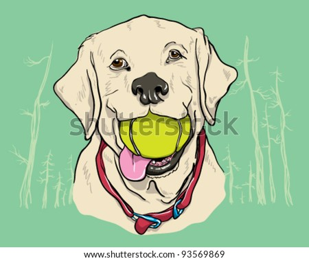 Yellow Lab - stock vector