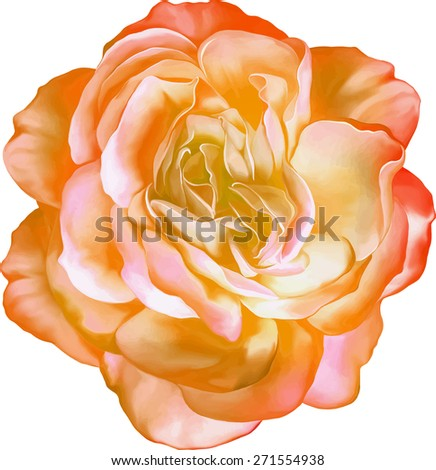 Yellow orange Sexy and beautiful and rose bud isolated on white background. Vector illustration - stock vector