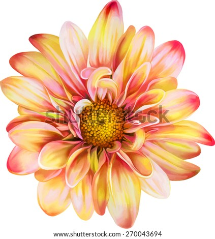 Yellow Red chrysanthemum flower, Yellow flower, Spring flower.Isolated on white background. Vector golden-daisy - stock vector