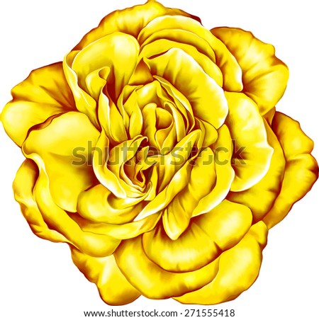Yellow Sexy and beautiful and rose bud isolated on white background. Vector illustration - stock vector