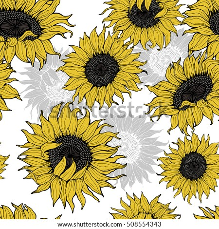 Yellow Sunflowers On A White Background Vector