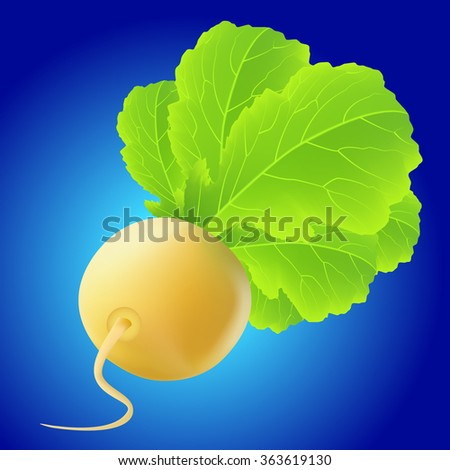 Yellow turnip with big leaves over blue background - stock vector