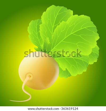 Yellow turnip with big leaves over green background - stock vector