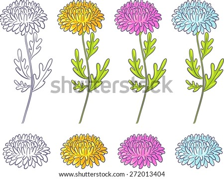 Yellow, white and pink chrysanthemums. Isolated set