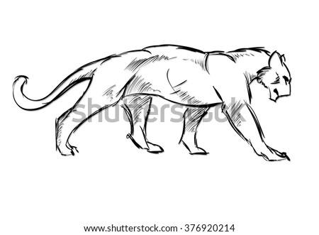 Young cougar. Wild cat. Vector sketch. - stock vector