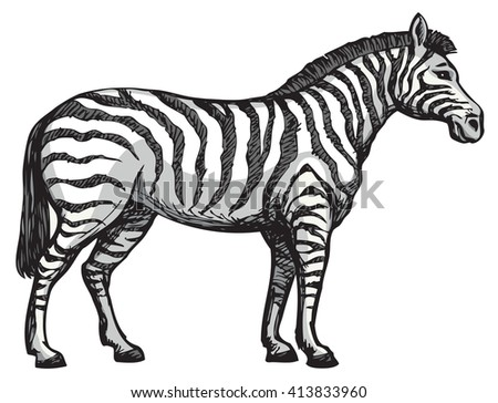 Young cute big funny stripy equid standing in grassland savannah plain. Freehand outline ink hand drawn picture sketchy in art scribble style black pen on white paper. Side view with space for text - stock vector