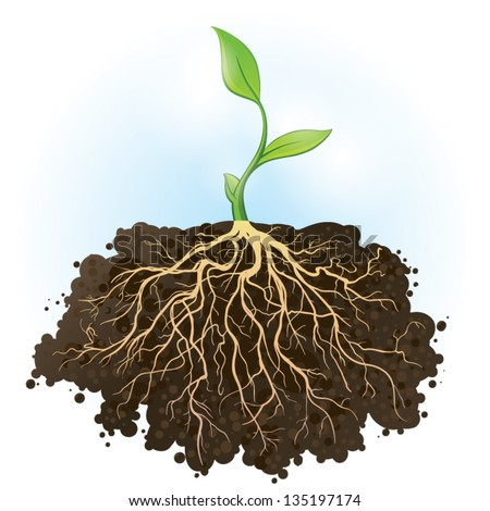 Young green plant with strong roots visible - stock vector