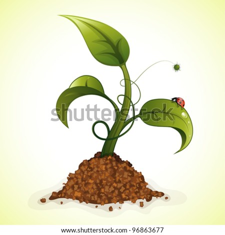 Young Green Sprout from the Ground with Water Drops and Ladybug, vector illustration - stock vector