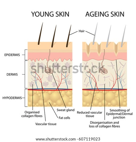 Skin Layers – defenderauto.info