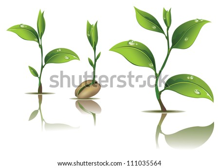 Young plant life process on white background - stock vector