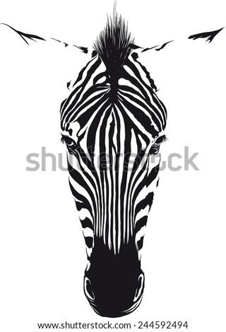 Zebra Head - stock vector