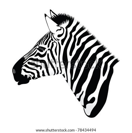 Zebra Head Stock Images Royalty-Free Images U0026 Vectors | Shutterstock