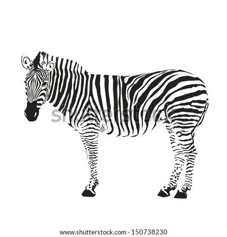 zebra silhouette  - stock vector