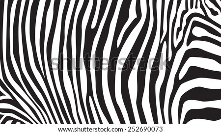 Zebra stripes pattern, illustration