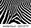 zebra texture - stock vector