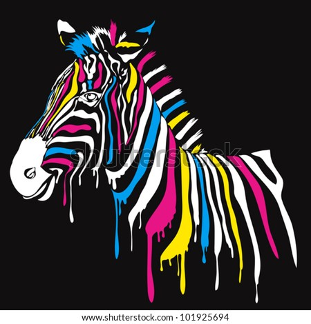 Zebra with colored stripes with black background - stock vector
