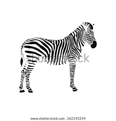Zebra Illustration 522078853