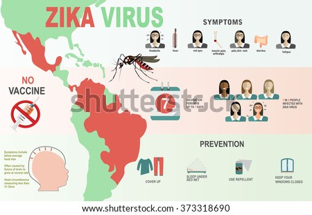 Zika virus infographic elements - prevention, transmission, vaccine, symptoms, microcephaly, protection measures. Zika virus disease. Zika virus design template. Isolated vector illustration.