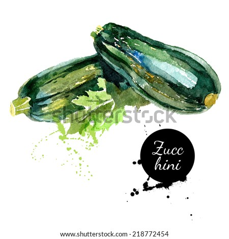 Zucchini. Hand drawn watercolor painting on white background. Vector illustration - stock vector
